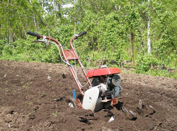 Культивировать почву не менее двух раз